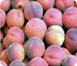 已经测序的植物基因组:List of Sequenced plants Genomes - 喜欢吃桃子 - wangyufeng的博客