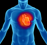NIH Study Finds Largest Set of Genes Related to Major Risk Factor for Heart Disease